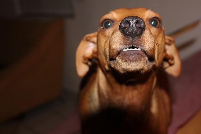 Zdjęcie główne #3902 - Dlaczego mój pies jest agresywny wobec innych czworonogów? 5 najczęstszych powodów