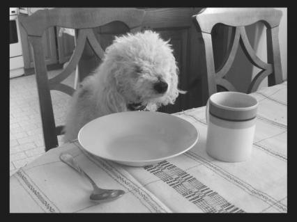 Zdjecia psów - 2