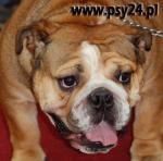 Zdjecia psów - 3
