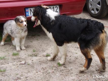 Zdjęcia psów - galeria Donaty, 1