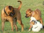 Zdjęcia psów - galeria Donaty, 2