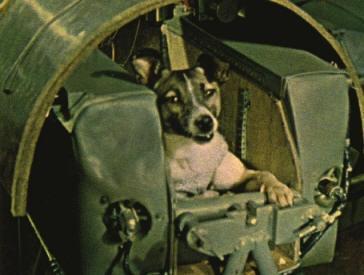 Pies Łajka - kosmonauta