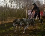 Wyścigi psich zaprzęgów - 12,13 grudnia 2009 r