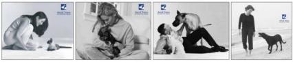 Korespondencyjny kurs dla opiekunów zwierząt