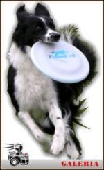 Frisbee - krążek dla psa
