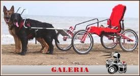 Dog cart sport - psi wózek