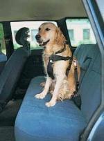 Szelki samochodowe dla psa
