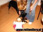 Rottweiler - galeria 2