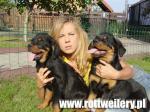 Rottweiler - galeria 5