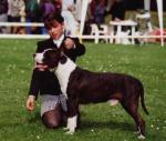 AMERICAN STAFFORDSHIRE TERIER