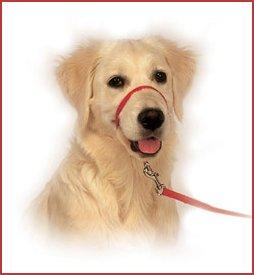 Gentle Leader dla psów dorosłych